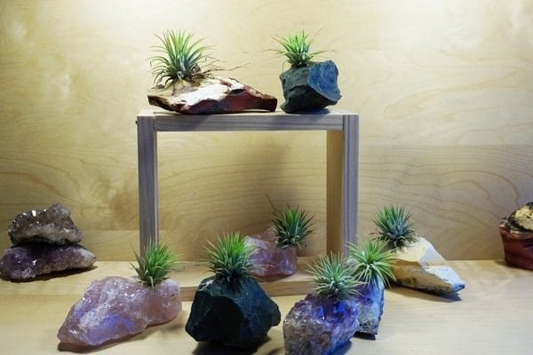 51 Most Amazing Air Plant Display Ideas