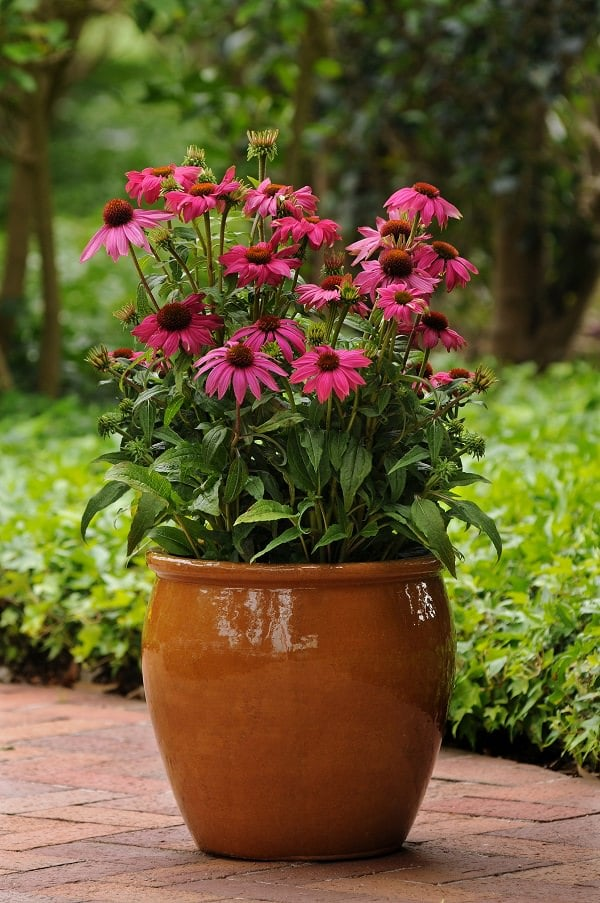 Beautiful Potted Plants Patio
