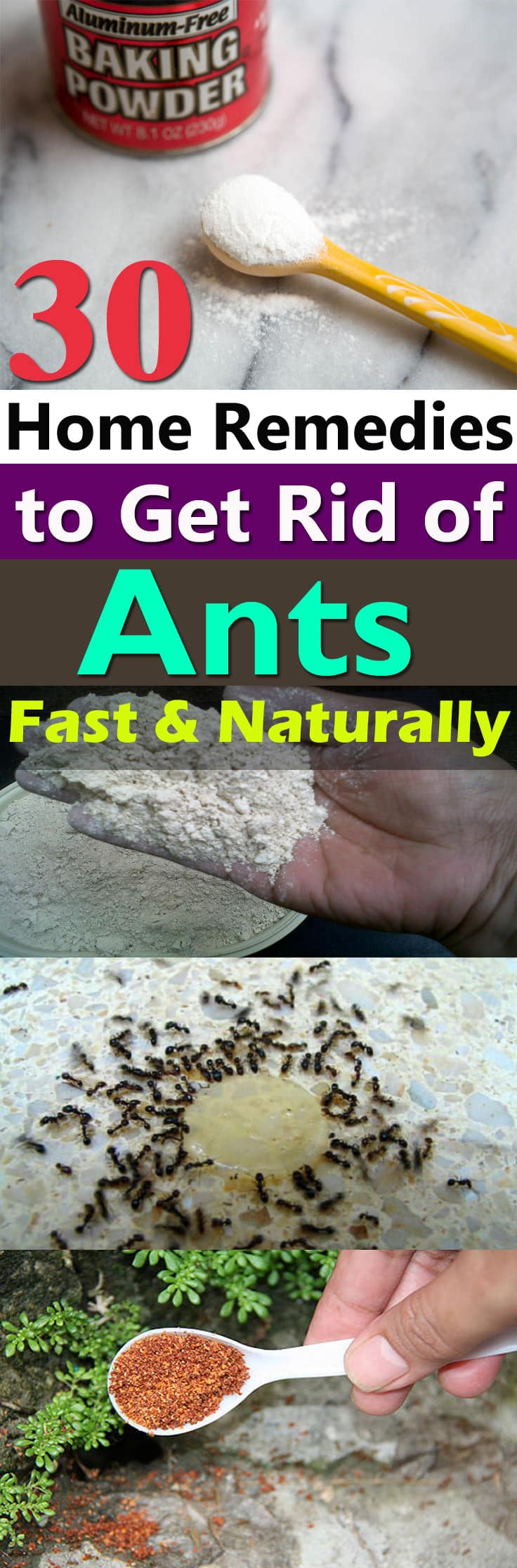 How to get rid of house ants