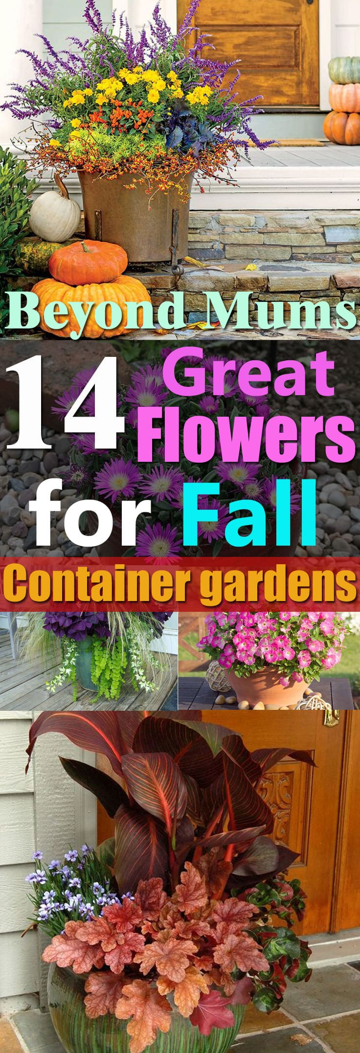 14 Great Fall Flowers For Containers Fall Flowers For Pots