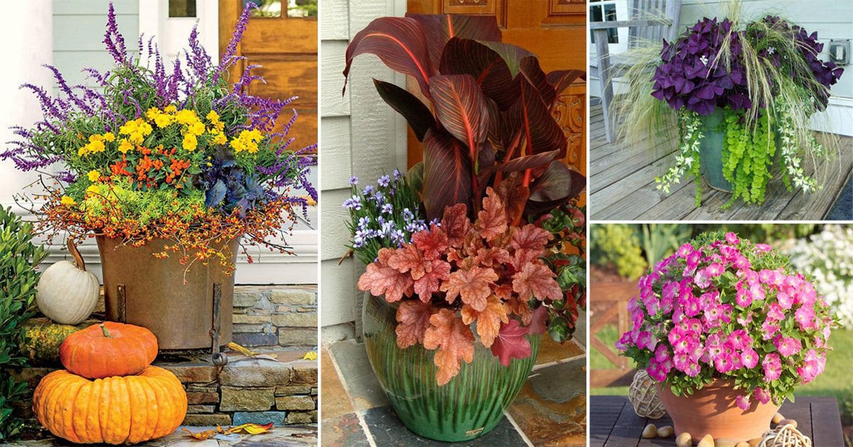 14 Great Fall Flowers For Containers Pots Balcony Garden Web