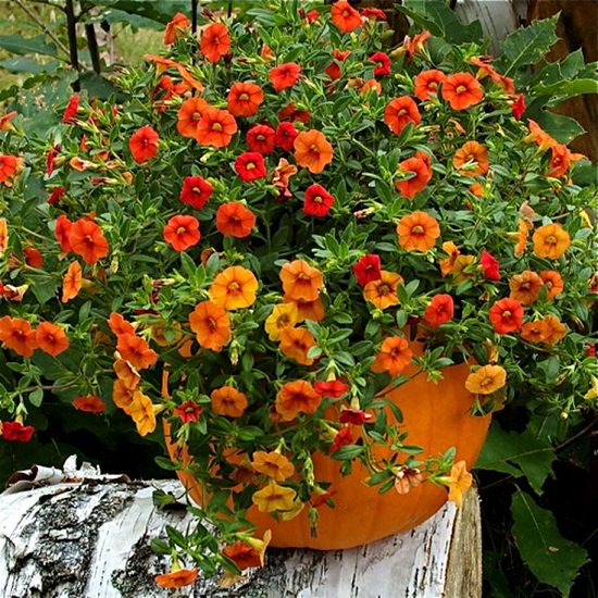 15 diy pumpkin planter ideas for fall decorations balcony garden web diy pumpkin flower planter solutioingenieria Images