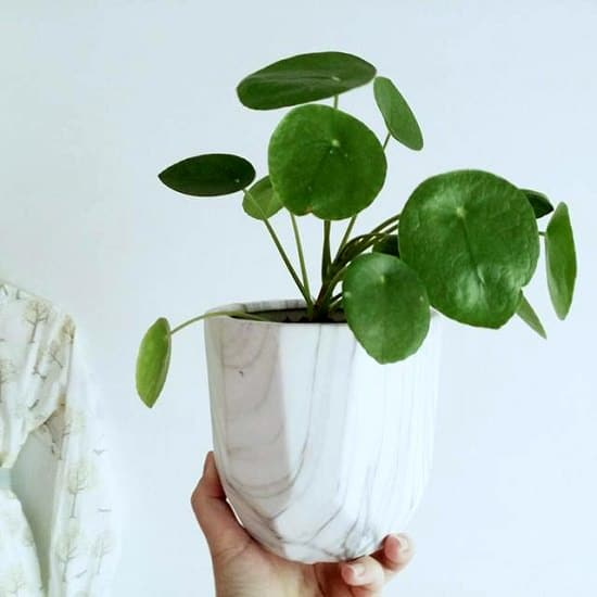 The indoor jungle: lush, breathing, cozy and alive. Plants in every corner, in every nook, on every windowsill. It's what we aspire to in our homes, and what makes us excited to explore the new plants that come into the nursery.