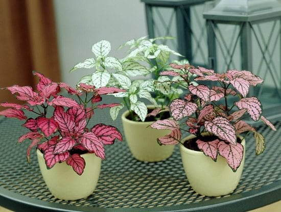 10 Cute Small Indoor Plants | Small Houseplants | Balcony Garden Web