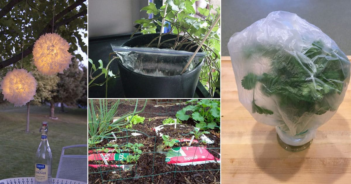 11 DIY Uses Of Plastic Bags In The Garden That Are Practical & Cheap
