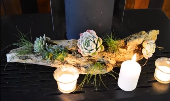 9 Creative Diy Succulent Driftwood Planter Ideas Balcony