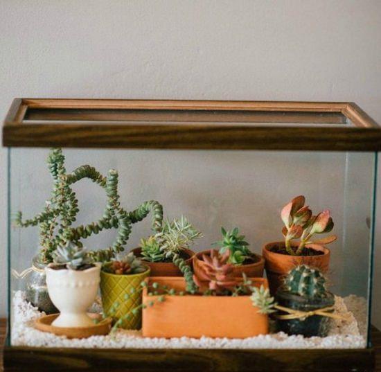 8 DIY Fish Tank Planter & Terrarium Ideas