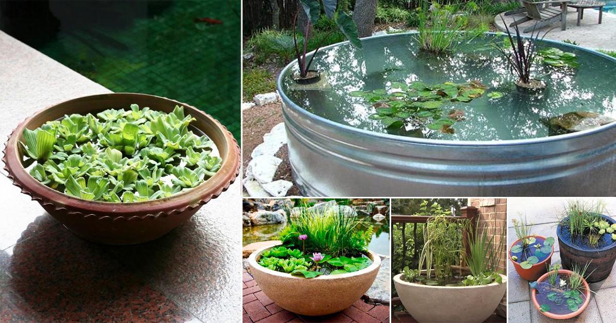 Ordinary Container Water Garden Ideas Part - 2: 13 Peaceful DIY Container Water Garden Ideas For Container Gardeners |  Balcony Garden Web