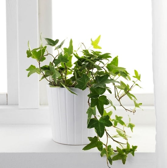 Indoor Plants Recommended By NASA