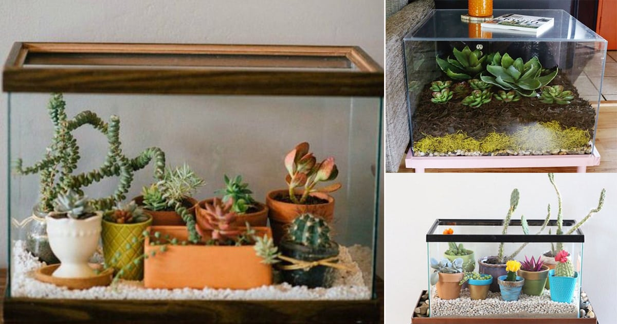 8 Diy Fish Tank Planter Terrarium Ideas Balcony Garden Web