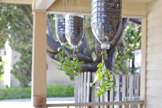 DIY Tomato Garden Ideas 8