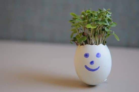 DIY Eggshell Ideas for easter gifting