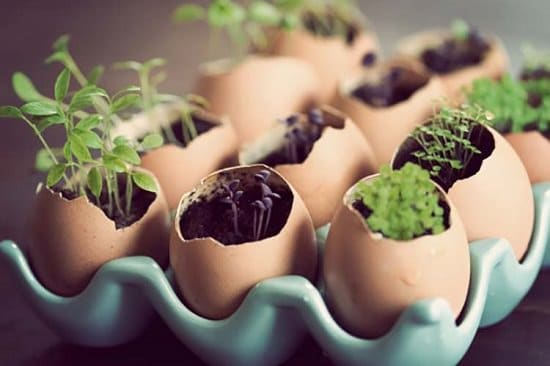 DIY Eggshell Ideas for you to try