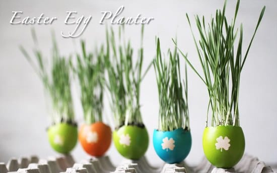 DIY Eggshell Ideas for planting