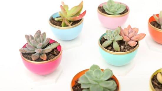 DIY Mini Succulent Planter