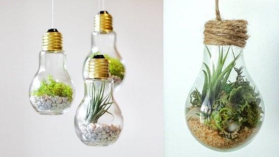 Terrarium Bulb Planter