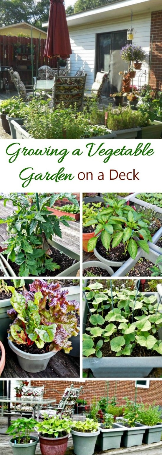 Carol From GardeningCook.com Shares Her Valuable Tips And Knowledge For  Creating A Deck Vegetable Garden In Her Article Here. Must Read That, If  Youu0027re A ...