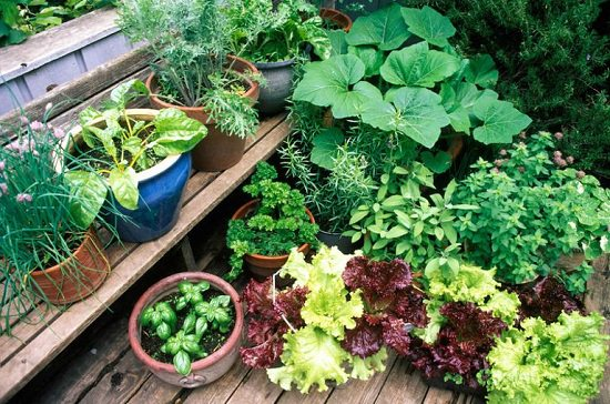 Step Ladder Herb Garden