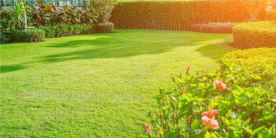 Apply evenly and lightly throughout your lawn. If you're not sure about the results, dilute it with water and test it on a smaller area.