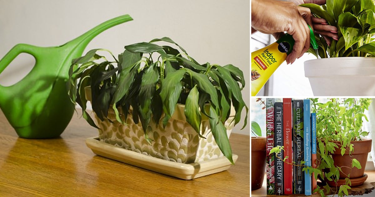 Your Favorite Indoor Plant Dying | 15 Houseplant Problems That Are