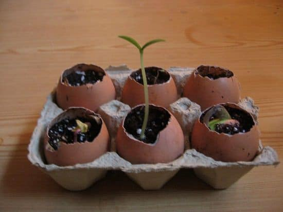 DIY Eggshell Ideas that are easy to make and implement