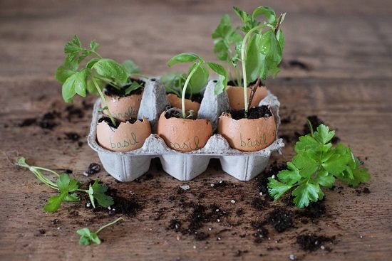 DIY Eggshell Ideas you can make in no time