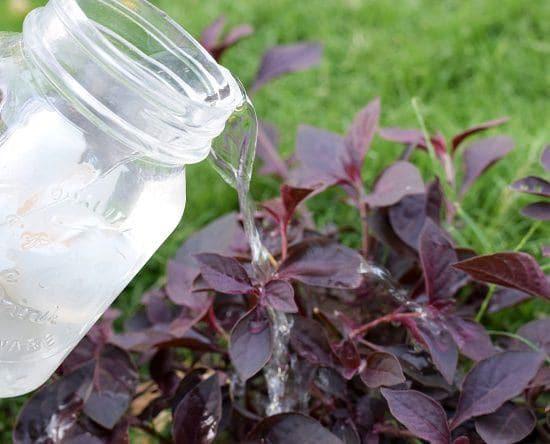 Homemade Liquid Fertilizer you can use