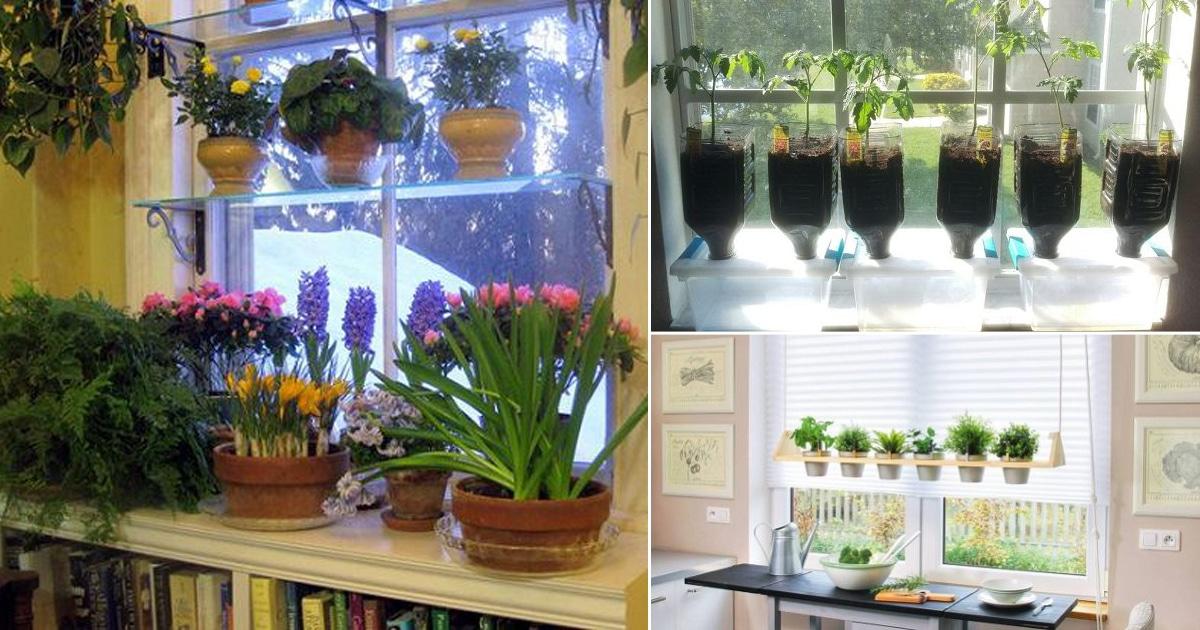 Charmant 16 DIY Indoor Window Garden Ideas For Urban Gardeners