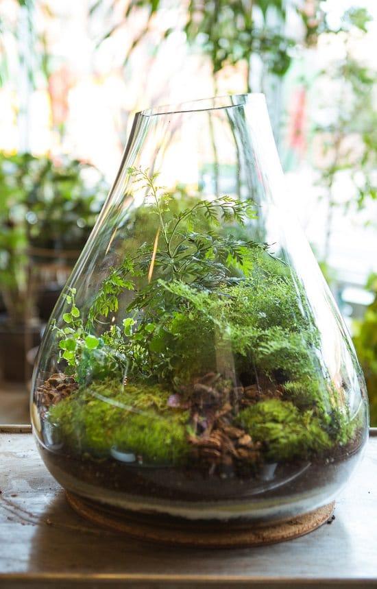 Indoor Moss Garden Ideas 2