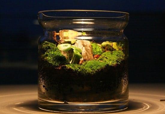 Indoor Moss Garden Ideas 3