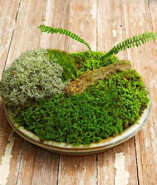 Indoor Moss Garden Ideas 4