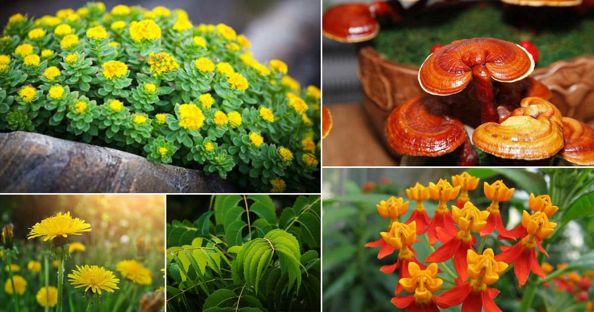 48 Best Medicinal Plants with Their Benefits | Balcony Garden Web