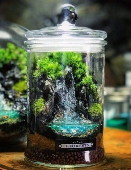 Indoor Moss Garden Ideas 6