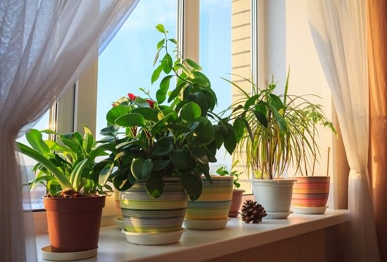 How to Water Houseplants
