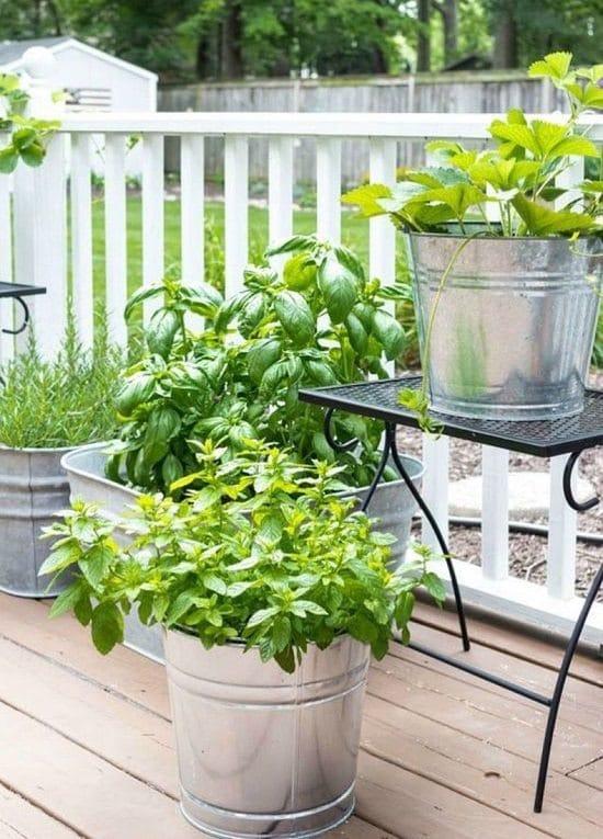 How to start an herb garden in an apartment