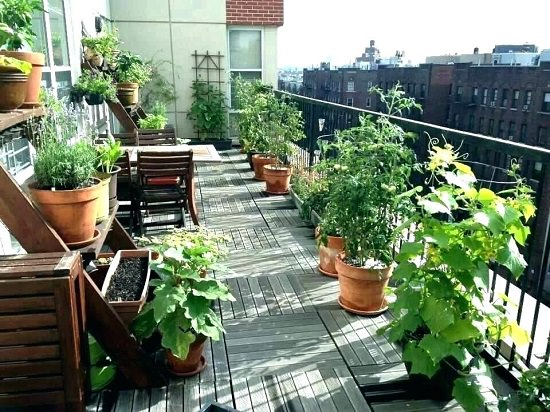 6 Types of Urban Herb Gardens That Need No Space!
