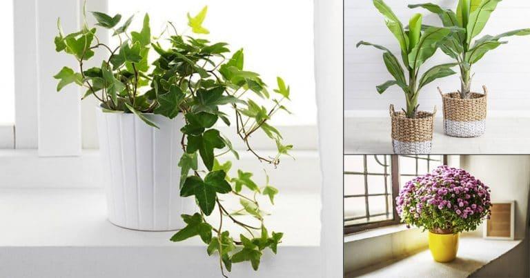 17 Indoor Plants Recommended By NASA | NASA Indoor Houseplants