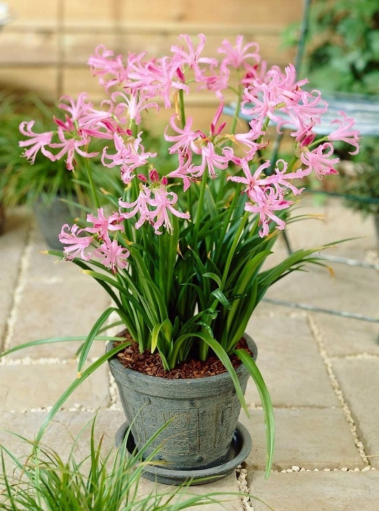 Pink flower names that you can use anytime