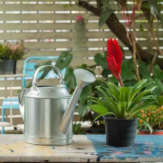 Houseplant Watering Rules