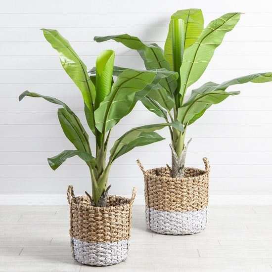 Check out Indoor Plants Recommended By NASA