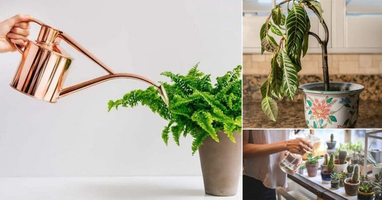Top Houseplant Watering Rules to Follow