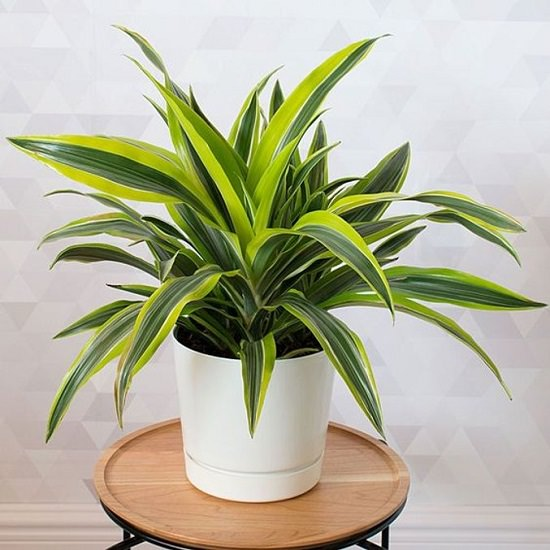 The Top Indoor Plants Recommended By NASA for homes