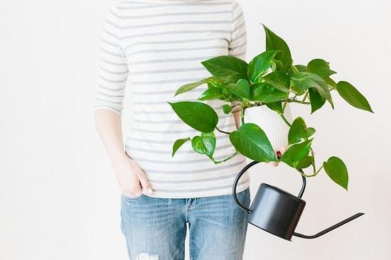 Houseplant Watering Rules 3