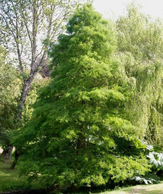 Best Trees to Plant in Georgia