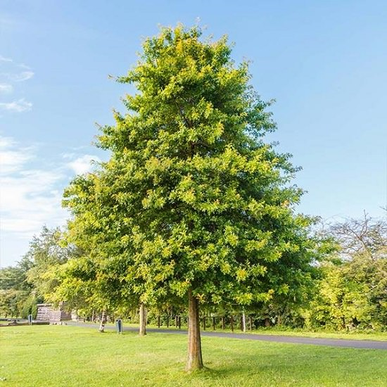 Best Trees to Plant in Georgia 9
