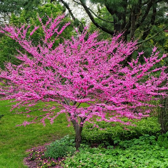 Best Trees to Plant in Georgia 12