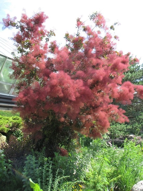 Best Trees to Plant in Georgia 5