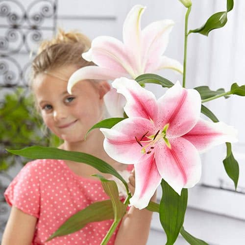 Best Types of Lilies 30
