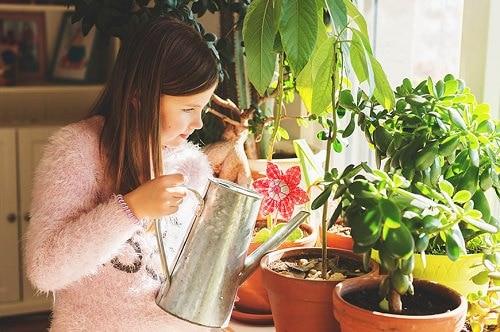 Houseplant Watering Rules 2