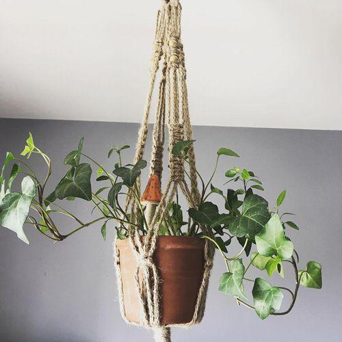 Types of Ivy Houseplants 14